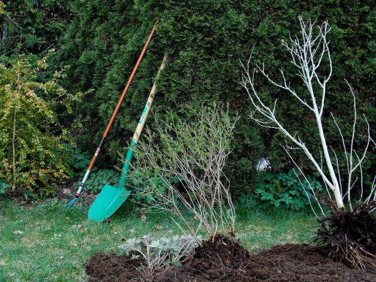 arbres prêts à planter